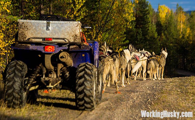 Höstträning_hundspann_fyrhjuling_1