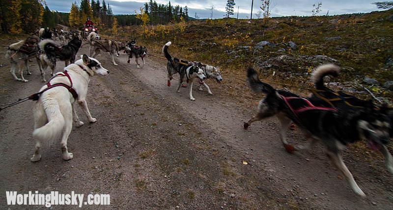Höstträning_hundspann_fyrhjuling_2